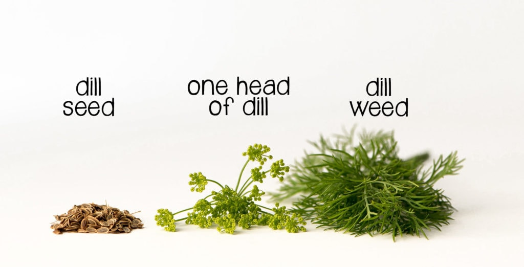 picture of dill seed, head of dill and will weed